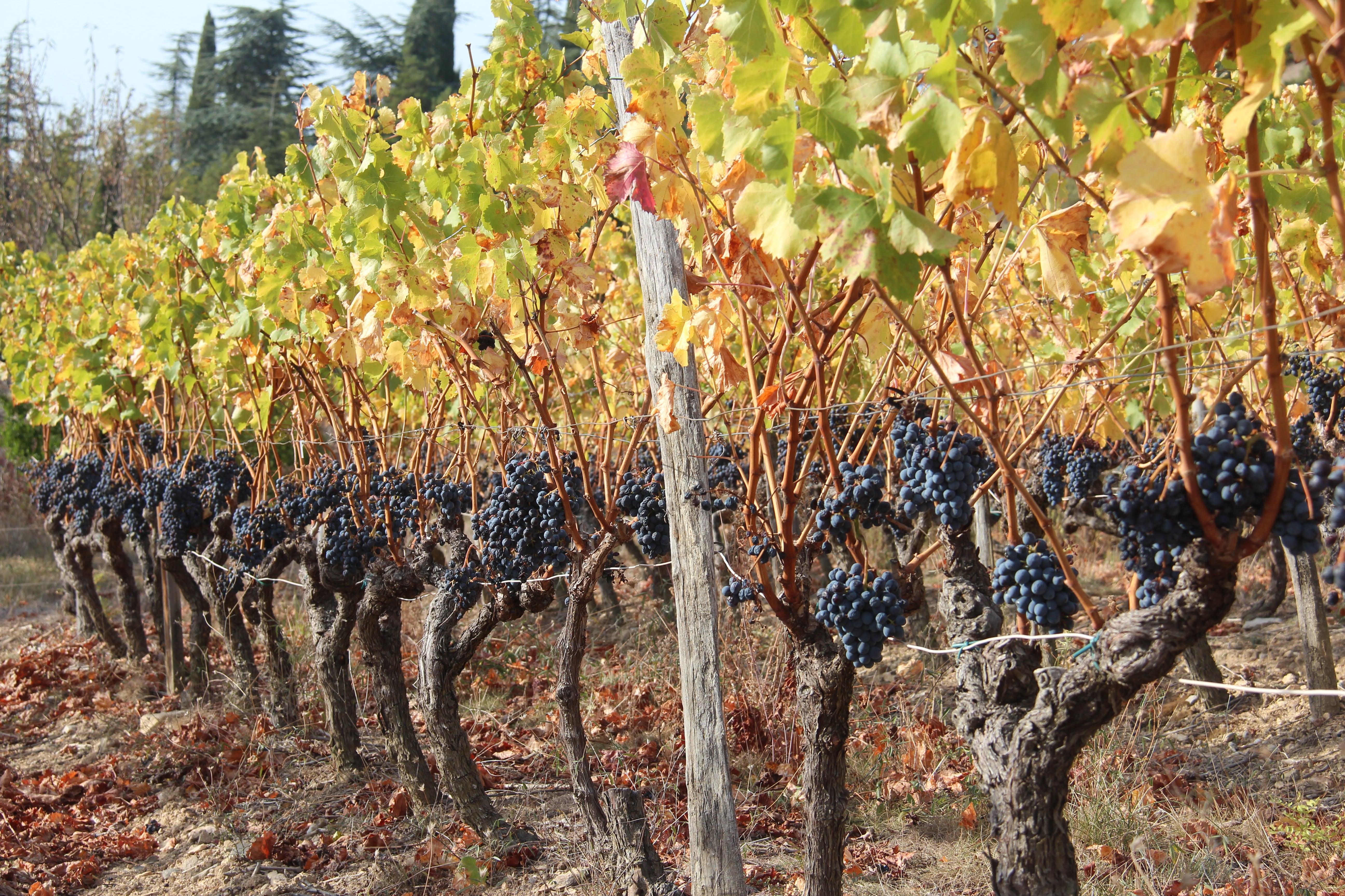 Domaine des vignes - Rhône 2 Vallées
